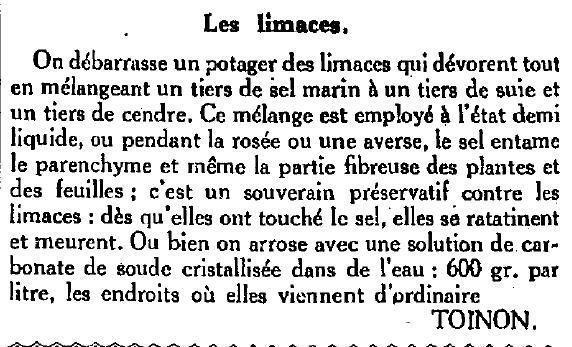 limaces.jpg